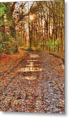 An Autumn Track Metal Print by Dave Woodbridge