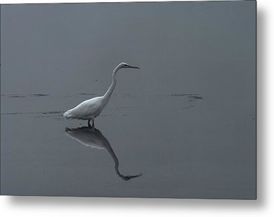An Egret Standing In Its Reflection Metal Print by Jeff Swan