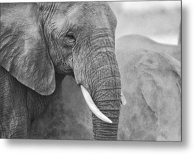 An Elephant Never Forgets Metal Print by Paul W Sharpe Aka Wizard of Wonders