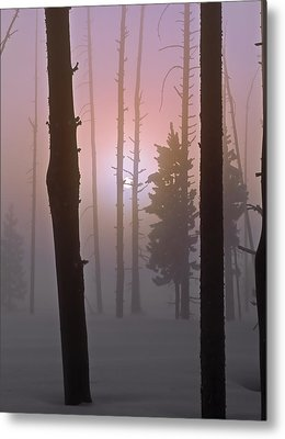 An Etheral Winter Forest Sunrise Metal Print by Leland D Howard