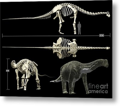 Anatomy Of A Titanosaur Metal Print by Rodolfo Nogueira
