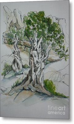 Ancient Olive Grove Metal Print by Therese Alcorn