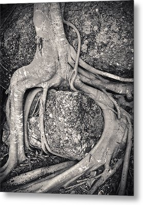 Ancient Roots Metal Print by Adam Romanowicz