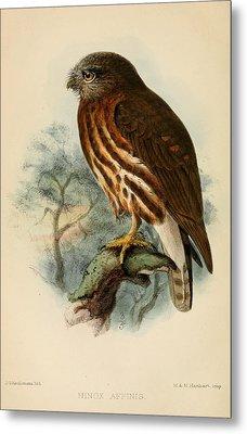 Andaman Hawk Owl Metal Print by J G Keulemans