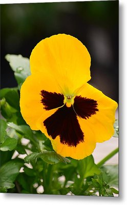 Angel Winged Pansy Metal Print by Maria Urso