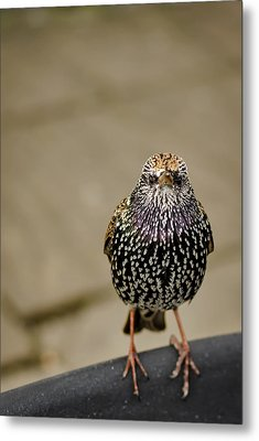 Angry Bird Metal Print by Heather Applegate