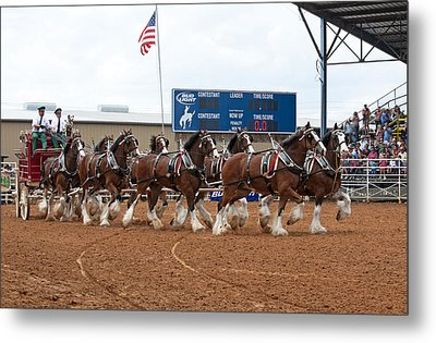 Anheuser Busch Clydesdales Pulling A Beer Wagon Usa Rodeo Metal Print by Sally Rockefeller