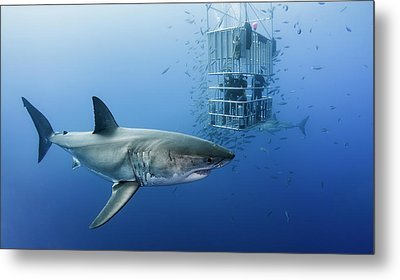 Animals In Cage Metal Print by Davide Lopresti