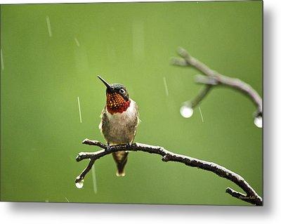 Another Rainy Day Hummingbird Metal Print by Christina Rollo