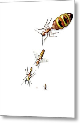 Ant Castes Metal Print by Claus Lunau