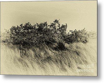 Apollo Beach Grass Metal Print by Marvin Spates