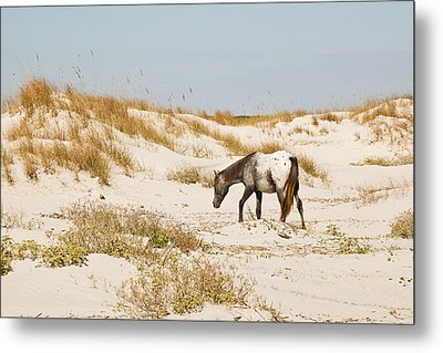 Appaloosa Beach Metal Print by Barbara Kraus - Northrup
