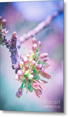 Apple Blossom Metal Print by VIAINA Visual Artist