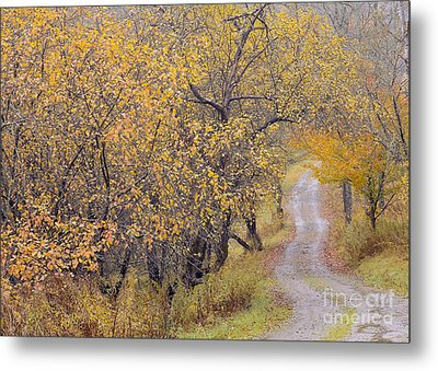 Apple Orchard Road Metal Print by Alan L Graham