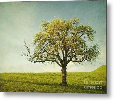 Appletree Metal Print by Priska Wettstein