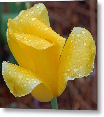 April Showers Metal Print by Suzanne Gaff