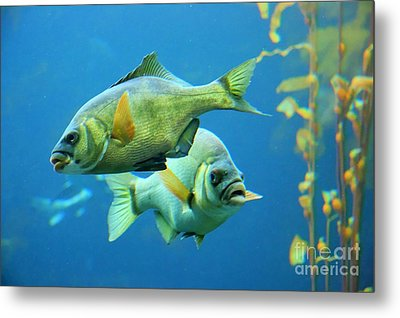 Aquarium Metal Print by Tap  On Photo