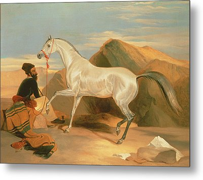 Arab Stallion Metal Print by Sir Edwin Landseer
