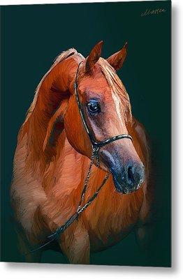 Arabian Horse Metal Print by Marina Likholat