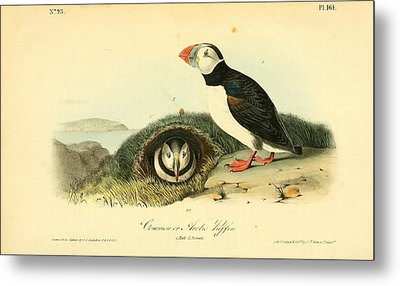 Arctic Puffin Metal Print by Philip Ralley