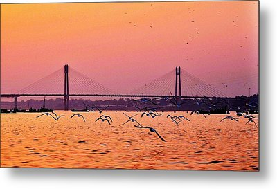 Arctic Terns At Sunset On The Ganges - Allahabad India Metal Print by Kim Bemis