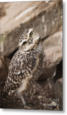 Are You Looking At Me? Metal Print by Anne Gilbert