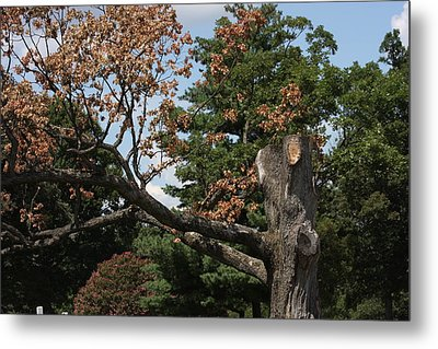Arlington National Cemetery - 121242 Metal Print by DC Photographer