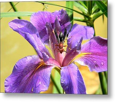 Artistic Purple Iris And Wasp Metal Print by Warren Thompson