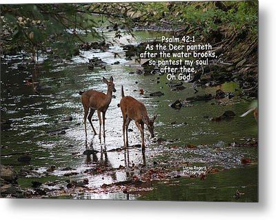 As The Deer Pants For Water Metal Print by Lorna Rogers Photography