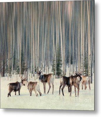 Caribou And Trees Metal Print by Priska Wettstein