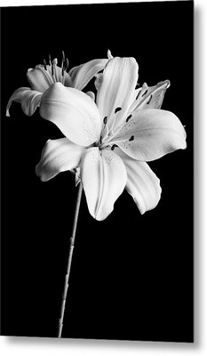 Asian Lilies 2 Metal Print by Sebastian Musial