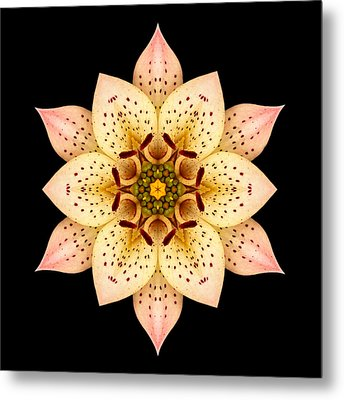Asiatic Lily Flower Mandala Metal Print by David J Bookbinder