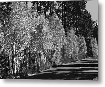 Aspens Metal Print by Jack McAward