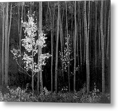 Aspens Northern New Mexico Metal Print by Ansel Adams
