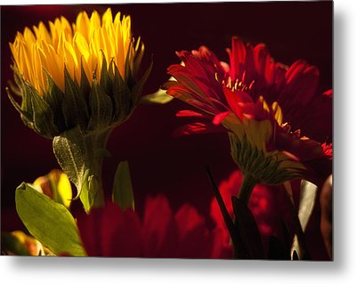 Asters In The Light Metal Print by Andrew Soundarajan
