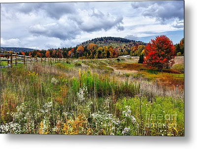 August Fall Colors Flowers And Trees I - West Virginia Metal Print by Dan Carmichael