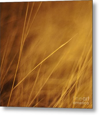 Aurum Metal Print by Priska Wettstein