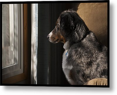 Aussie On Watch Metal Print by Ron Roberts