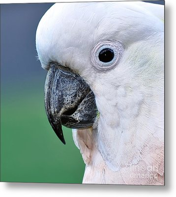Australian Birds - Cockatoo Up Close Metal Print by Kaye Menner