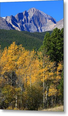 Autumn Aspens And Longs Peak Metal Print by James BO  Insogna