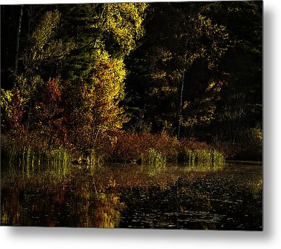 Autumn At It's Finest Metal Print by Thomas Young
