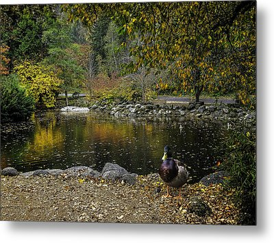 Autumn At Lithia Park Pond Metal Print by Diane Schuster