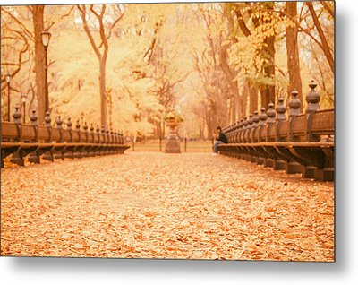 Autumn - Central Park Elm Trees - New York City Metal Print by Vivienne Gucwa