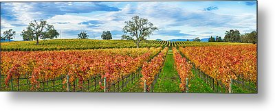Autumn Color Vineyards, Guerneville Metal Print by Panoramic Images