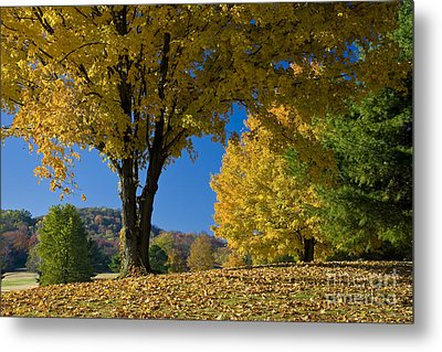 Autumn Colors Metal Print by Brian Jannsen