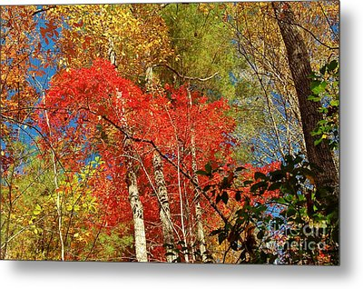 Autumn Colors Metal Print by Patrick Shupert
