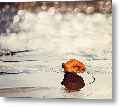 Autumn Metal Print by Diana Kraleva