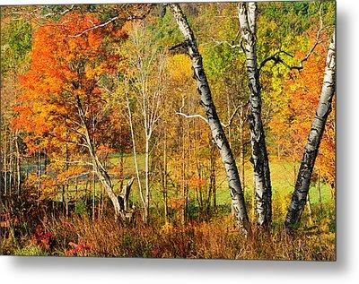 Autumn Forest Scene - Litchfield Hills Metal Print by Thomas Schoeller