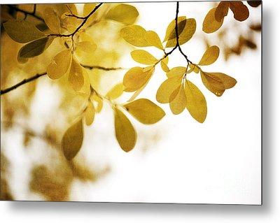 Autumn Gold Metal Print by Priska Wettstein