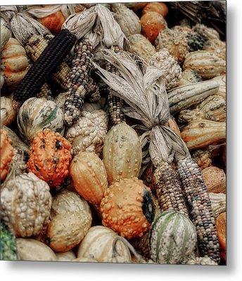 Autumn Gourds 2 Metal Print by Joann Vitali